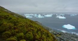 Antartika'da Renk Değişimi Başladı!